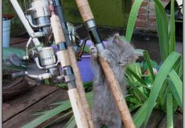 Упорный котик