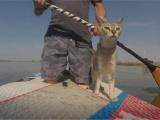 Кошке очень нравятся водные прогулки со своим владельцем