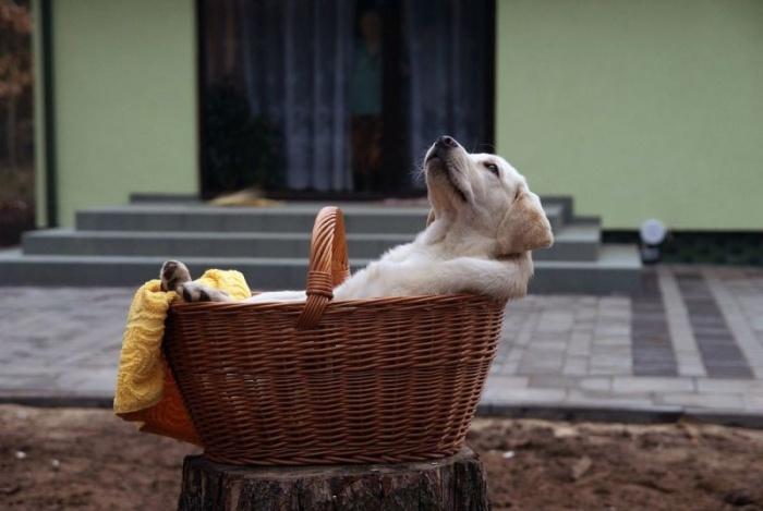 Забавные фото животных: песики которые вмиг поднимут настроение