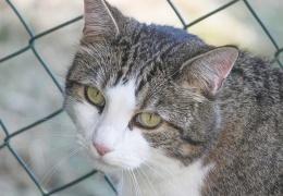 В Ашхабаде из-за вспышки коронавируса приказали уничтожить кошек