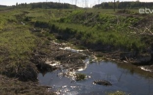 В Вирумаа представлен крупномасштабный проект по очистке водоемов