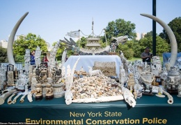 В Нью-Йорке прилюдно раздробили контрафактные изделия из слоновой кости на 4,5 млн долларов