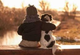 Трогательная дружба мальчика и трех собак