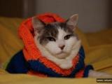Забавные кошки в различных нарядах