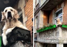 Милый пёс просто сидел на балконе, а стал главной достопримечательностью Гданьска