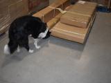 Таможенники будут тренировать собак искать в посылках наркотики и табак на складе в Йыхви