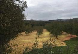 Яблоневый сад после урагана Офелия в Ирландии