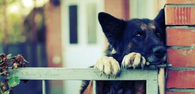 Союз защиты животных: прежде чем заводить питомца, взвесьте все «за» и «против»