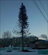 Жители Копейска возмущены лысой новогодней елкой на площади