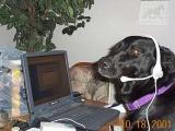 Животные за компьютером