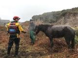 Непростая это работа — вытащить лошадь из болота