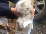 В Казани эвакуировали жилой дом из-за подозрительной коробки