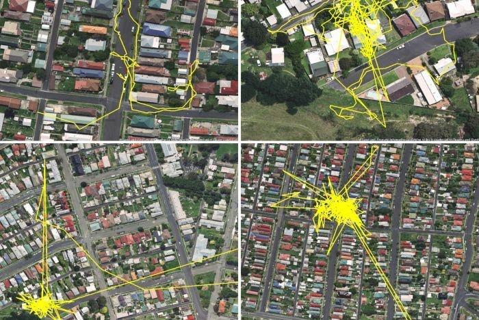 GPS-передатчик показал передвижения кошки в течение одного дня