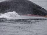 Туристы чудом остались в живых после того, как их чуть не раздавил кит