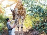 Любопытный жираф пришел на свадьбу