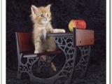Вот она - кошачья жизнь!