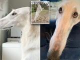Вот это шнобель: собака с длинным носом очаровала соцсети