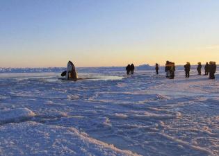Касатки в ледяном плену