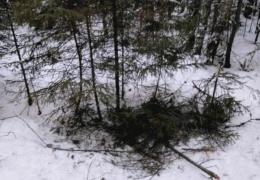 Собаки помогли выжить в лесу пропавшим подросткам