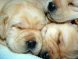 Позитивная подборка фотографий - Собаки