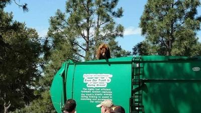 Медведь прокатился с ветерком на крыше мусоровоза