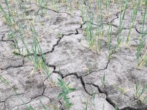 В Литве из-за засухи объявлено экстремальное положение