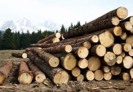 Ущерб от спиленных в нарвском садоводстве Elektron деревьев оценили в 9500 евро