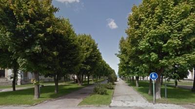Жители Силламяэ возмущены планами срубить деревья в рамках реконструкции бульвара Мере