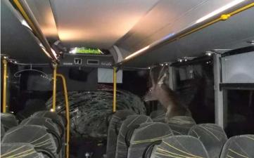 Олень по-хамски влетел в автобус через лобовое стекло, а вышел культурно - через заднюю дверь