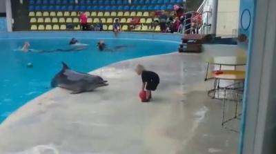 Дельфин играет с малышом в мячик