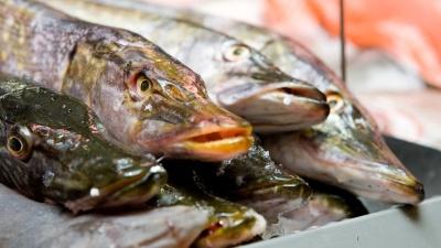 На границе в Ивангороде пешеходам не позволили пронести мясо и рыбу из Эстонии