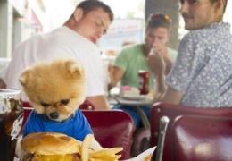Новая звезда Instagram умилительный пёс Джифф