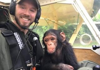 Трогательные кадры полета детеныша шимпанзе в реабилитационный центр