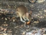 Морковный дождь в Австралии
