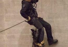 Верный пес-полицейский ни при каких обстоятельствах не оставит напарника