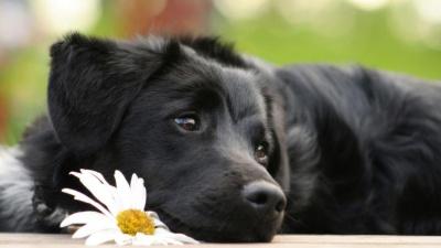 """В одном из буддийских храмов Японии собаку научили """"молиться"""""""