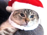 Симпатично. Новогодние коты.
