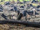 Лесной пожар в Нарва-Йыэсуу локализован, угрозы распространению огня нет