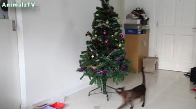 Кошки и новогодние ёлки