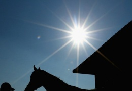 На хуторе под Нарвой сгорел весь запас сена для лошадей, хозяйки подозревают поджог