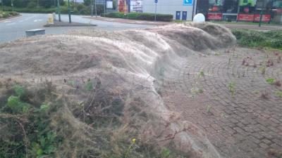 Гусеницы покрыли паутиной кусты в Лондоне