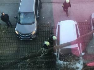 Ребенок в Кадриорге чудом увернулся от упавшего дерева
