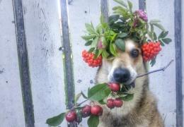 Пёс, который удивляет всех своим талантом