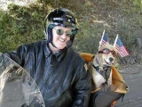 Собаки байкеров