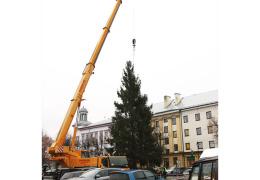 Рождественская ель прибыла из района нарвских садоводств