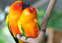 Со Всемирным днем поцелуя!