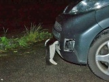Девушка сбила кота на скорости 120 кмчас