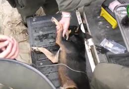 Спасение пёсика в Колумбии