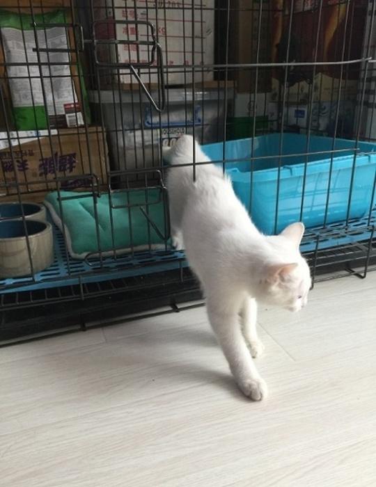 Наивные люди попытались закрыть кота в клетке