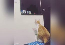 Котенок просит маму достать игрушку